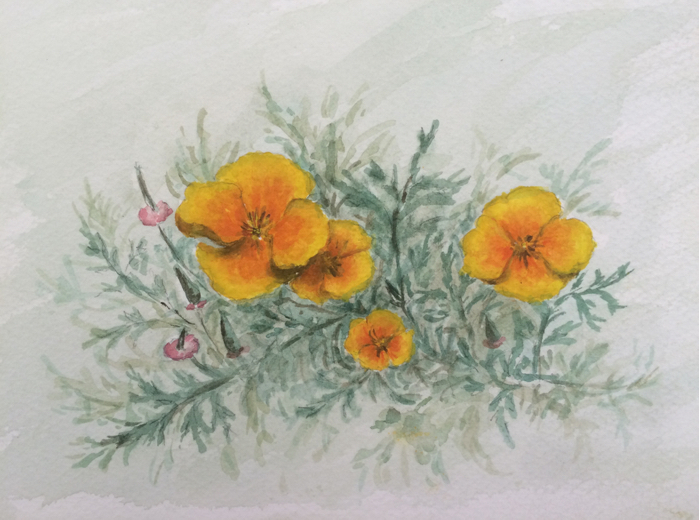 California Poppies, Watercolor.
