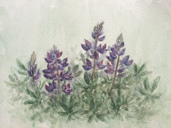 Lupines, Watercolor.