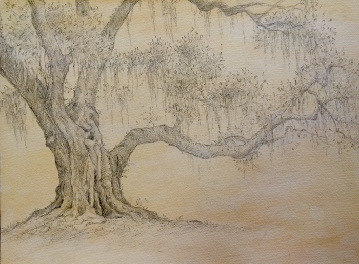 Old Oak. 9 x 12 in, Graphite on Paper.