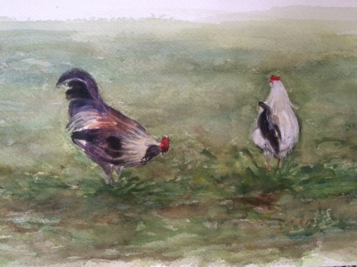 Roosters. 7 x 12 in, Watercolor.