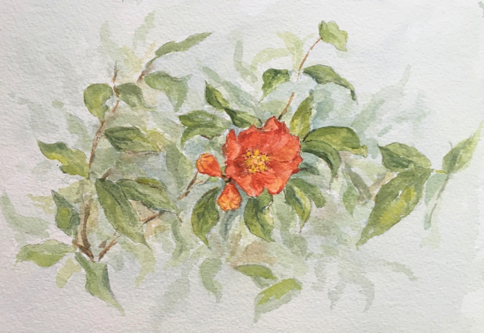 Pomegranate flower. 7 x 10 in, Watercolor.
