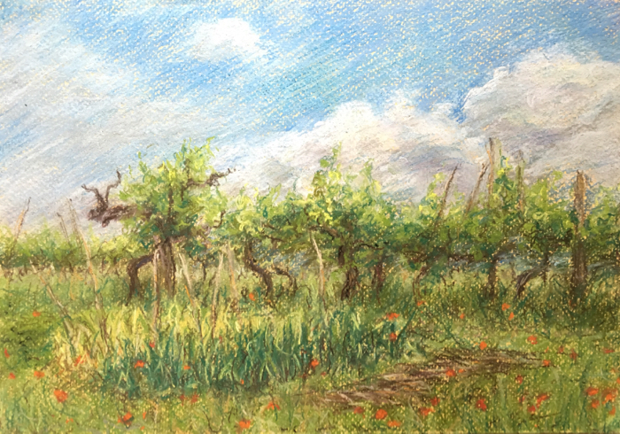 Tuscan garden. 21 x 30 cm, Pastels.