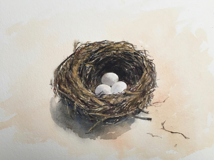 Daniela's Nest. 26 x 36 cm, Watercolor.