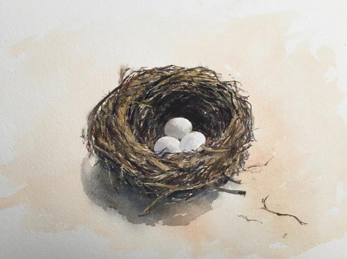 Daniela's Nest. 26 x 36 cm, Watercolor.