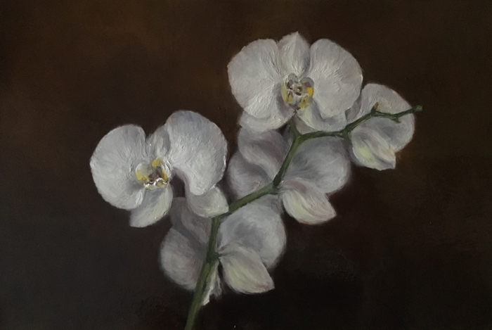 Orchids. Oil on Panel, 20 x 30 cm.